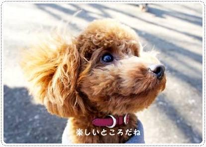 20120213_dogrun10.jpg