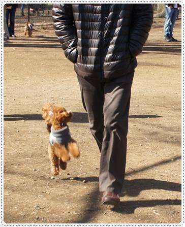 20120213_dogrun11.jpg