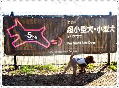 20120213_dogrun3.jpg