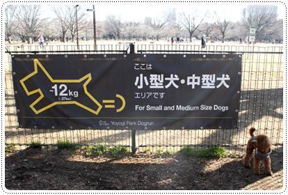 20120213_dogrun6.jpg