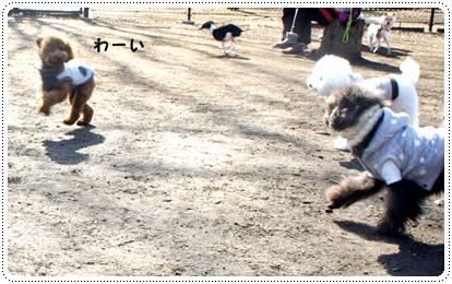 20120213_dogrun7.jpg