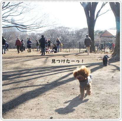 20120213_dogrun9.jpg