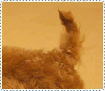 20120229_tail4.jpg