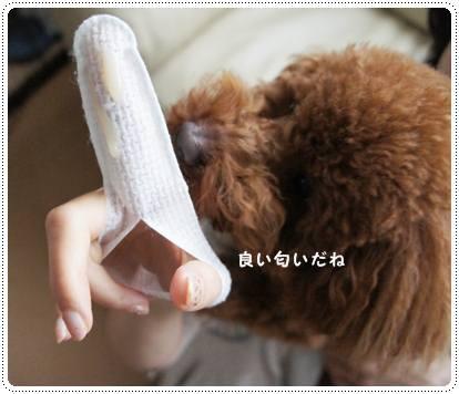 20120319_brushing2.jpg
