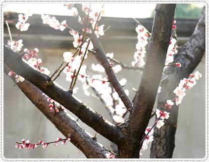 20120321_spring1.jpg