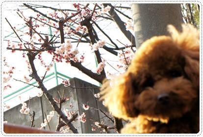 20120321_spring2.jpg