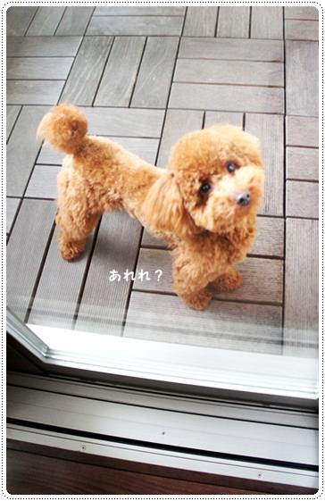 20120328_balcony1.jpg