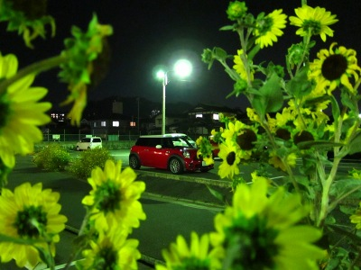 20111018_MINI-花花