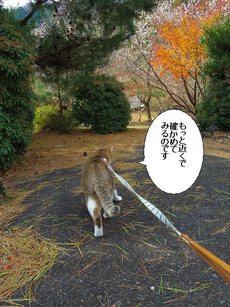鶴見岳10