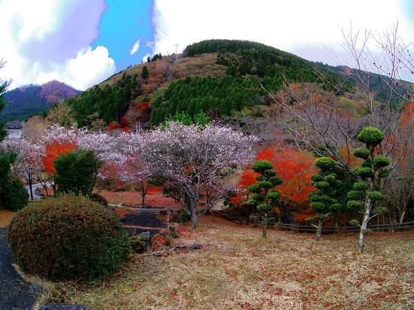 鶴見岳16