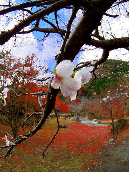鶴見岳14