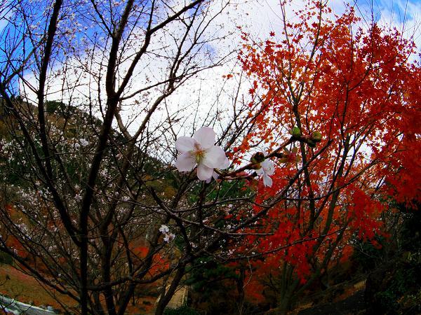 鶴見岳15
