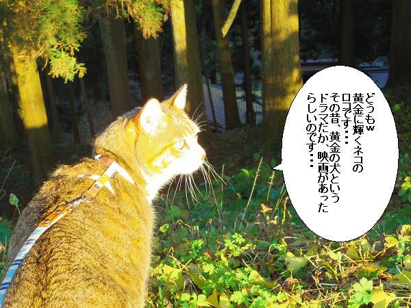 吉見神社1