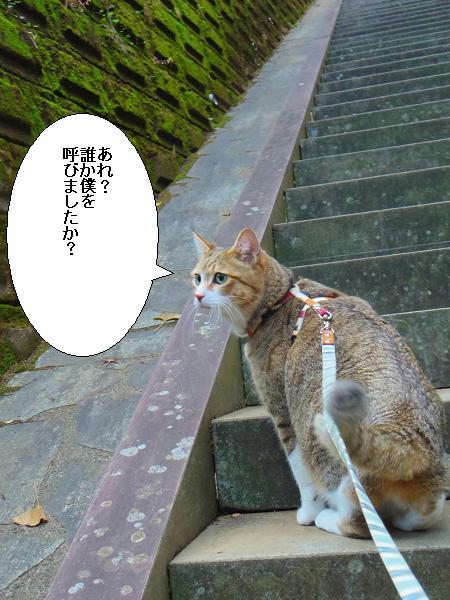 吉見神社10