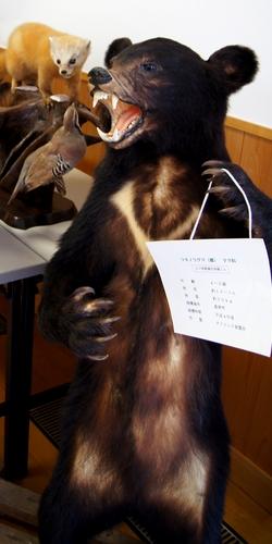 230814 つのしま自然館12-1