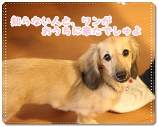 2011_11_19_3582.jpg