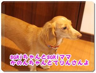 2011_11_19_3585.jpg