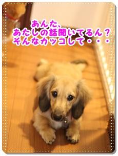 2011_11_19_3589.jpg