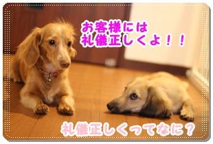 2011_11_19_3601.jpg