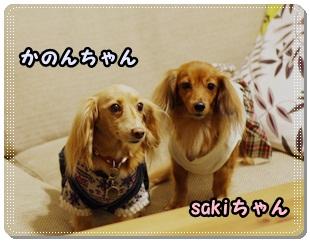 2011_11_19_3672.jpg