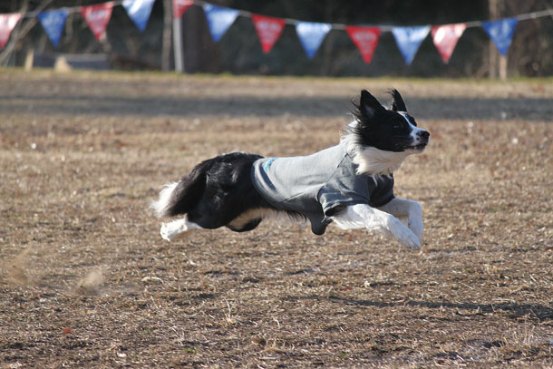 飛行犬アルフ