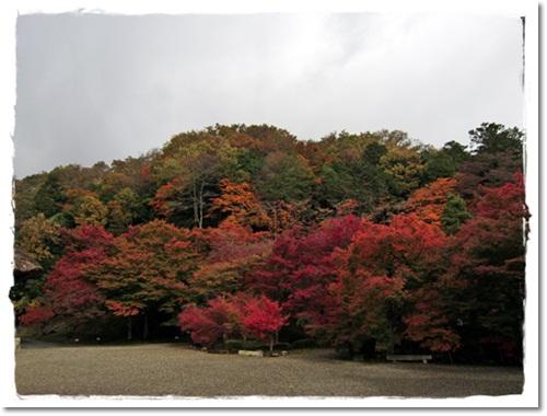 2011・11・21・安国寺下ガレージセールー1
