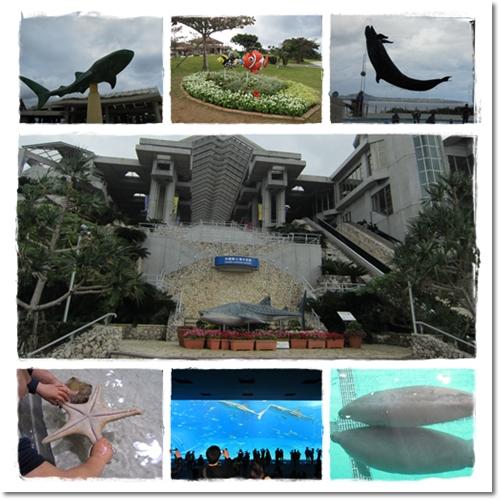 2011・12・23・美ら海水族館ー5