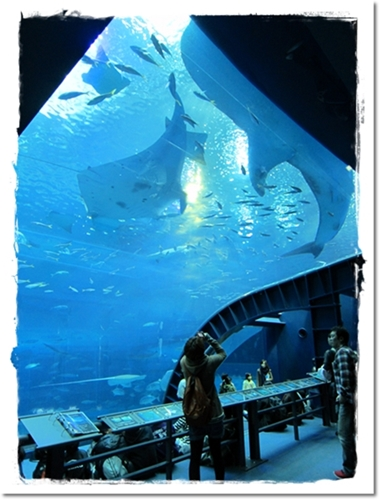 2011・12・23・美ら海水族館ー6