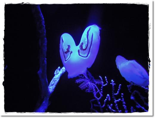2011・12・23・美ら海水族館ー3