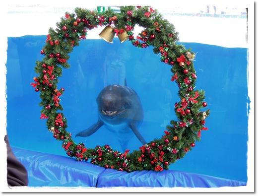 2011・12・23・美ら海水族館ー1