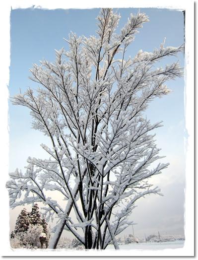 2012・1・5・大雪ー5