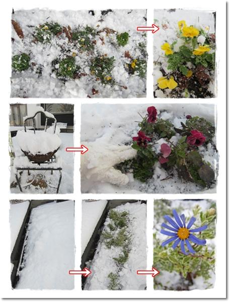 2012・1・5・大雪ー2
