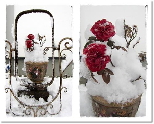 2012・1・5・大雪ー3