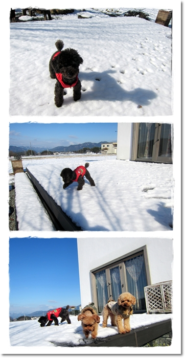 2012・1・6・大雪