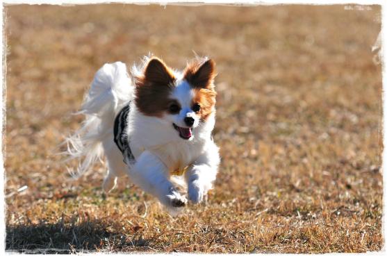 ②走る~♪