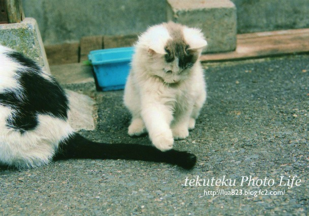 子猫としっぽ