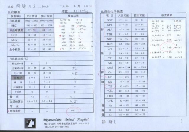 リオ血液検査2月10日