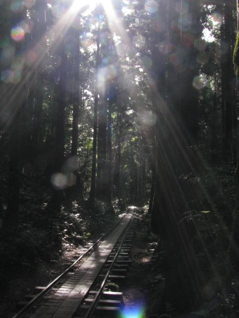 2011年8月屋久島 049