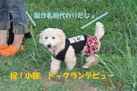 小鉄ドッグランデビュー!