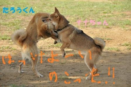タロウちゃんとナナちゃんお相撲