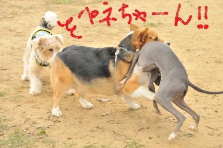 チロルちゃんペネちゃんグーたんちゃん