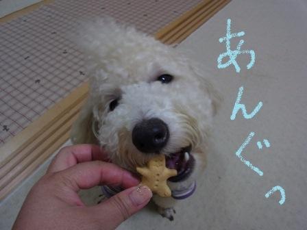 小鉄クッキーあんぐ