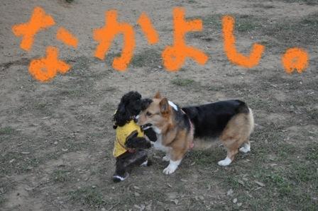 リコちゃんチロルちゃん