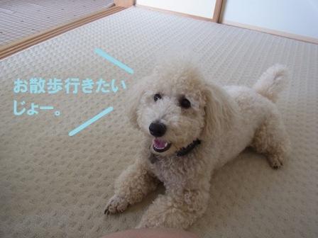 コテ散歩行きたい