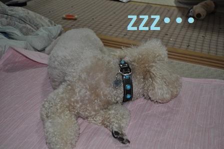 小鉄寝てる