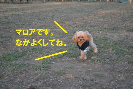 マロアちゃん紹介