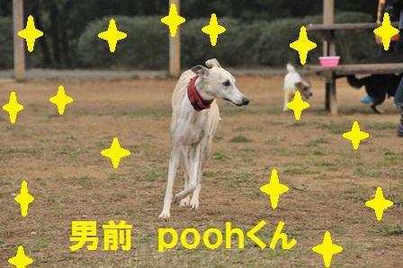 poohくん紹介