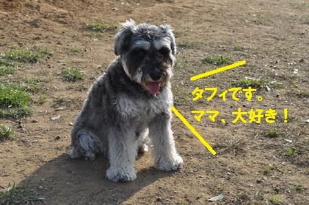 タフィちゃん紹介