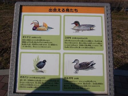 野鳥看板1