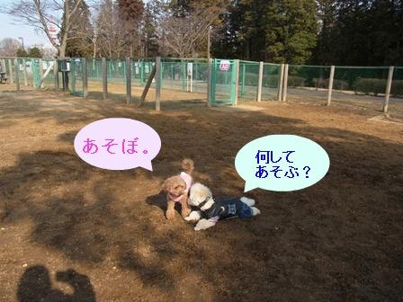 ①ココアちゃんコテ